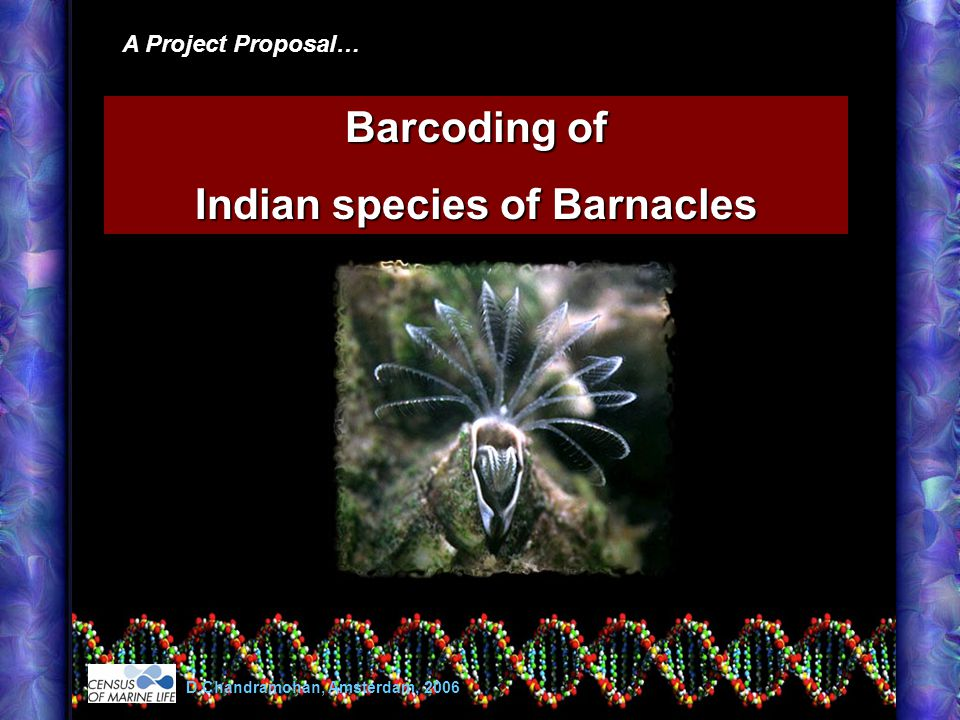 A Project Proposal… Barcoding of Indian species of Barnacles D.Chandramohan, Amsterdam, 2006