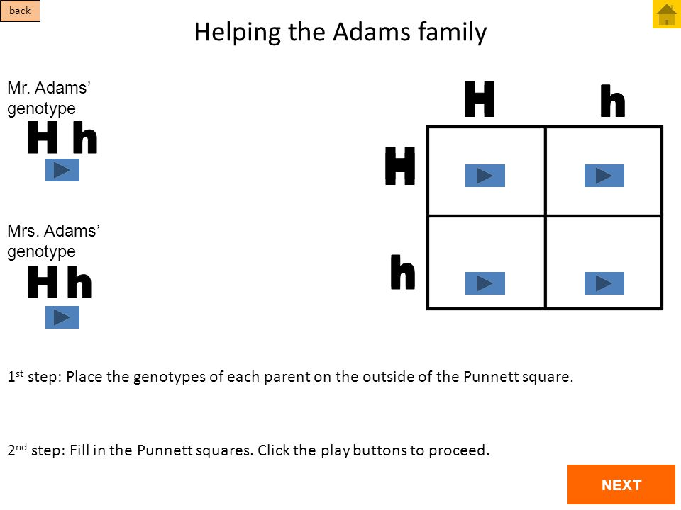 Helping the Adams family 1 st step: Place the genotypes of each parent on the outside of the Punnett square. 2 nd step: Fill in the Punnett squares. C