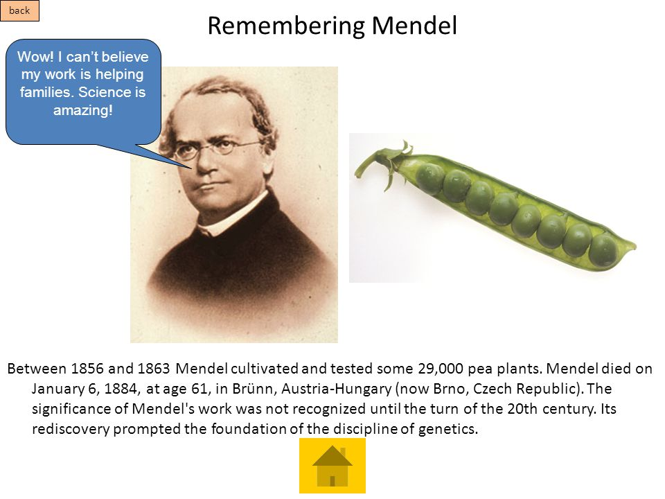 Remembering Mendel Between 1856 and 1863 Mendel cultivated and tested some 29,000 pea plants. Mendel died on January 6, 1884, at age 61, in Brünn, Aus