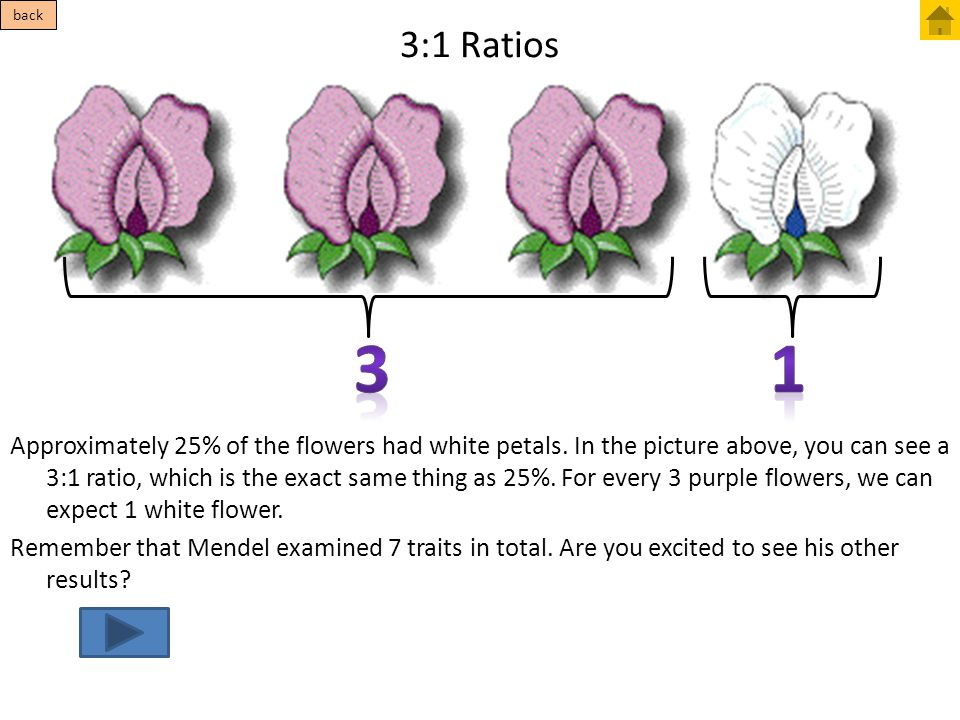 3:1 Ratios Approximately 25% of the flowers had white petals. In the picture above, you can see a 3:1 ratio, which is the exact same thing as 25%. For