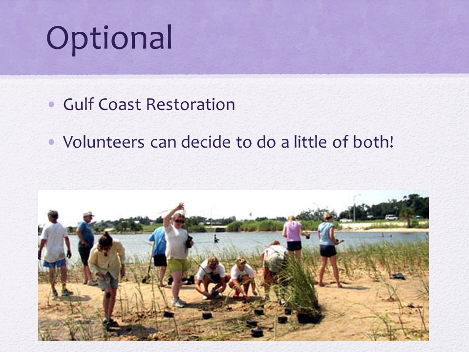 Optional Gulf Coast Restoration Volunteers can decide to do a little of both!
