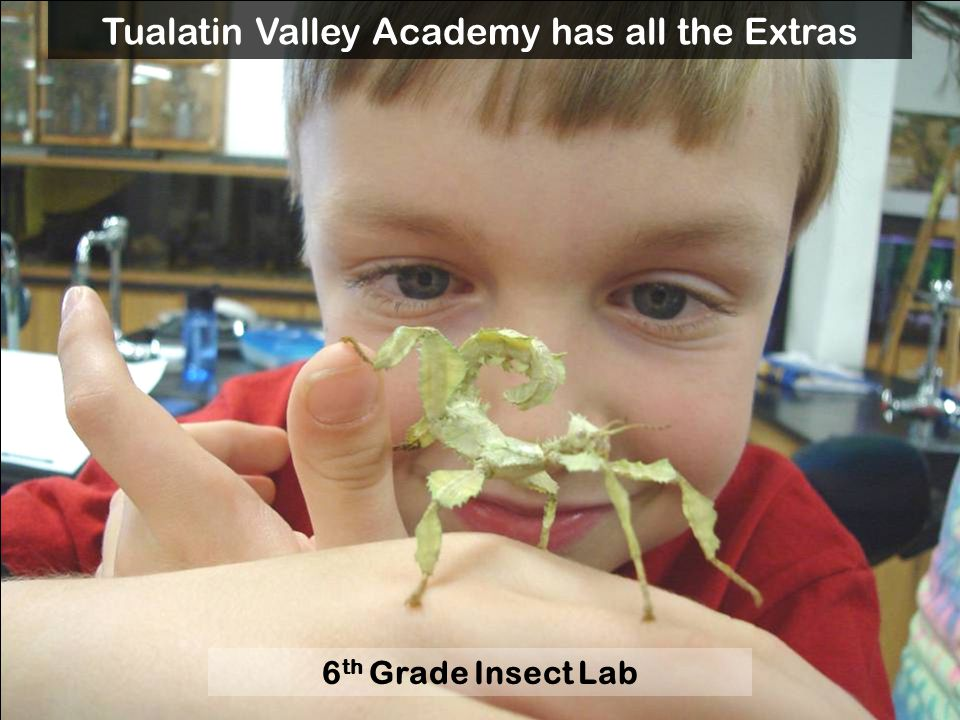 6 th Grade Insect Lab Tualatin Valley Academy has all the Extras