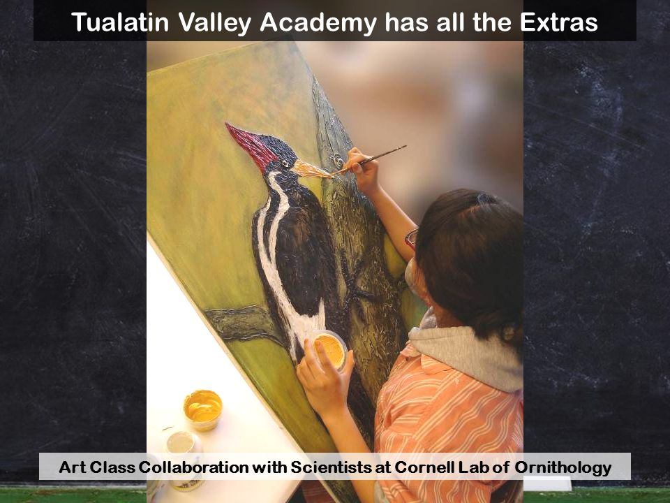 Art Class Collaboration with Scientists at Cornell Lab of Ornithology