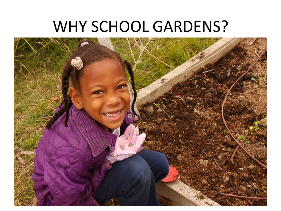 Academic Performance Learning Environment/Attitudes Toward Learning Research and anecdotal reports from teachers strongly support the value of gardens in creating a positive learning environment.