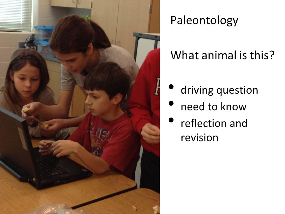 Paleontology What animal is this driving question need to know reflection and revision