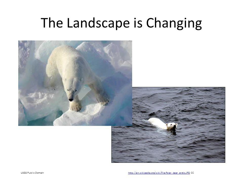 The Landscape is Changing http://en.wikipedia.org/wiki/File:Polar_bear_arctic.JPGhttp://en.wikipedia.org/wiki/File:Polar_bear_arctic.JPG CCUSGS Public Domain
