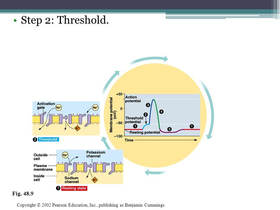 Step 2: Threshold. Copyright © 2002 Pearson Education, Inc., publishing as Benjamin Cummings Fig. 48.9