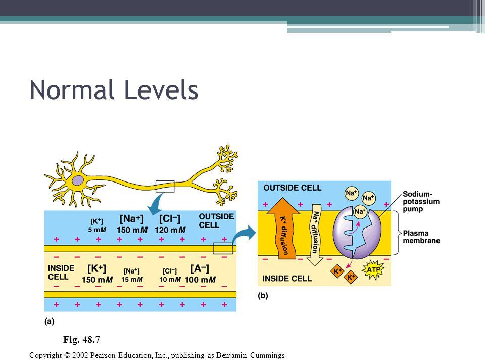 Normal Levels Copyright © 2002 Pearson Education, Inc., publishing as Benjamin Cummings Fig. 48.7