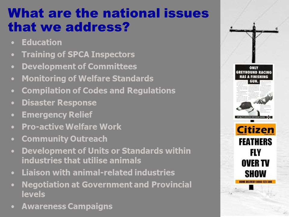 Education Training of SPCA Inspectors Development of Committees Monitoring of Welfare Standards Compilation of Codes and Regulations Disaster Response Emergency Relief Pro-active Welfare Work Community Outreach Development of Units or Standards within industries that utilise animals Liaison with animal-related industries Negotiation at Government and Provincial levels Awareness Campaigns What are the national issues that we address