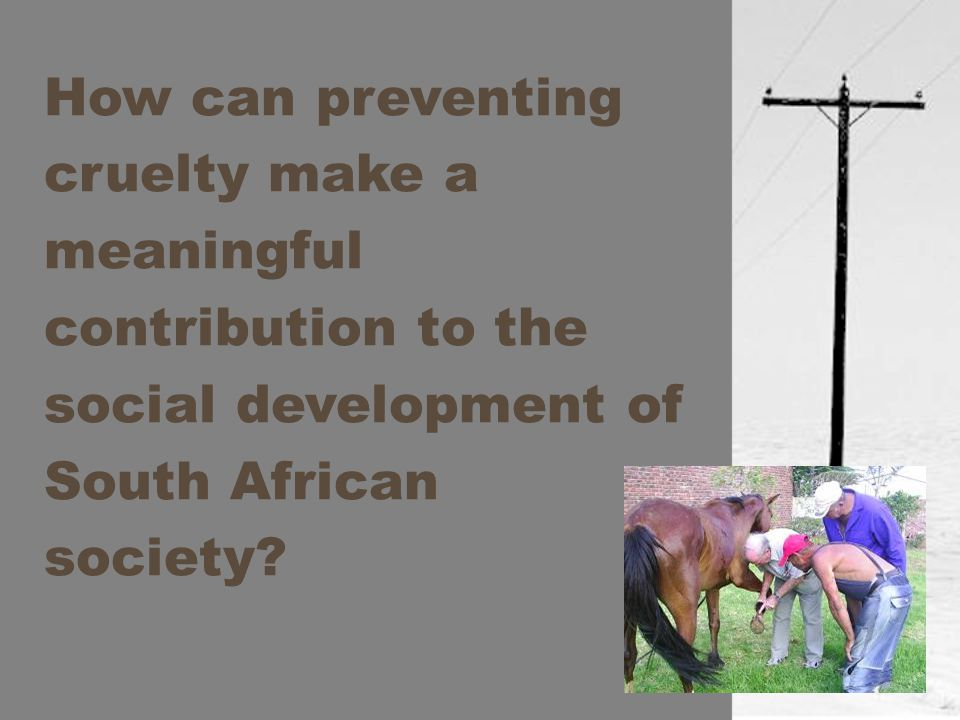 How can preventing cruelty make a meaningful contribution to the social development of South African society?