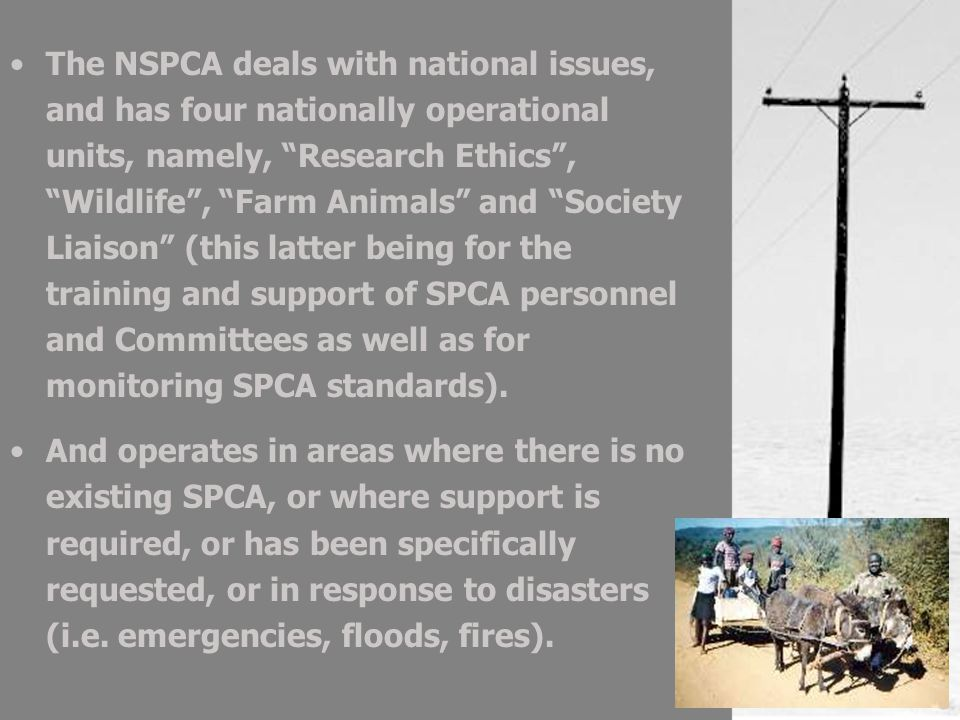 The NSPCA deals with national issues, and has four nationally operational units, namely, Research Ethics, Wildlife, Farm Animals and Society Liaison (this latter being for the training and support of SPCA personnel and Committees as well as for monitoring SPCA standards).
