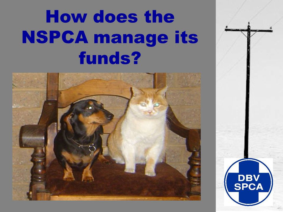 How does the NSPCA manage its funds?