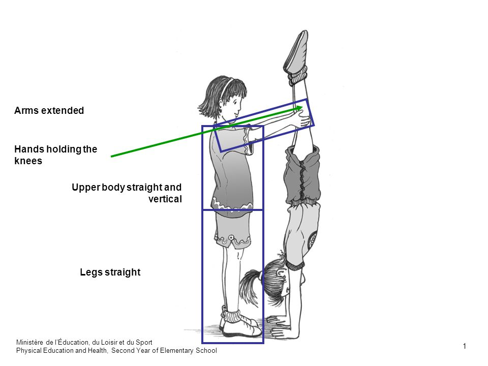Arms extended and hands on the floor supporting body Eyes focused on the floor Legs extended vertically Upper body vertical Ministère de lÉducation, du Loisir et du Sport Physical Education and Health, Physical Education and Health 2