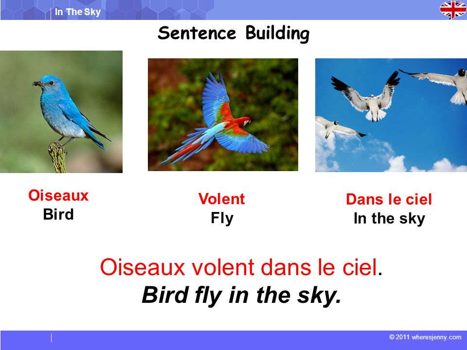 In The Sky © 2011 wheresjenny.com Sentence Building Oiseaux volent dans le ciel. Bird fly in the sky. Oiseaux Bird Volent Fly Dans le ciel In the sky