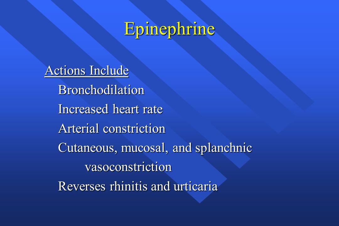 Epinephrine Actions Include Bronchodilation Bronchodilation Increased heart rate Increased heart rate Arterial constriction Arterial constriction Cuta