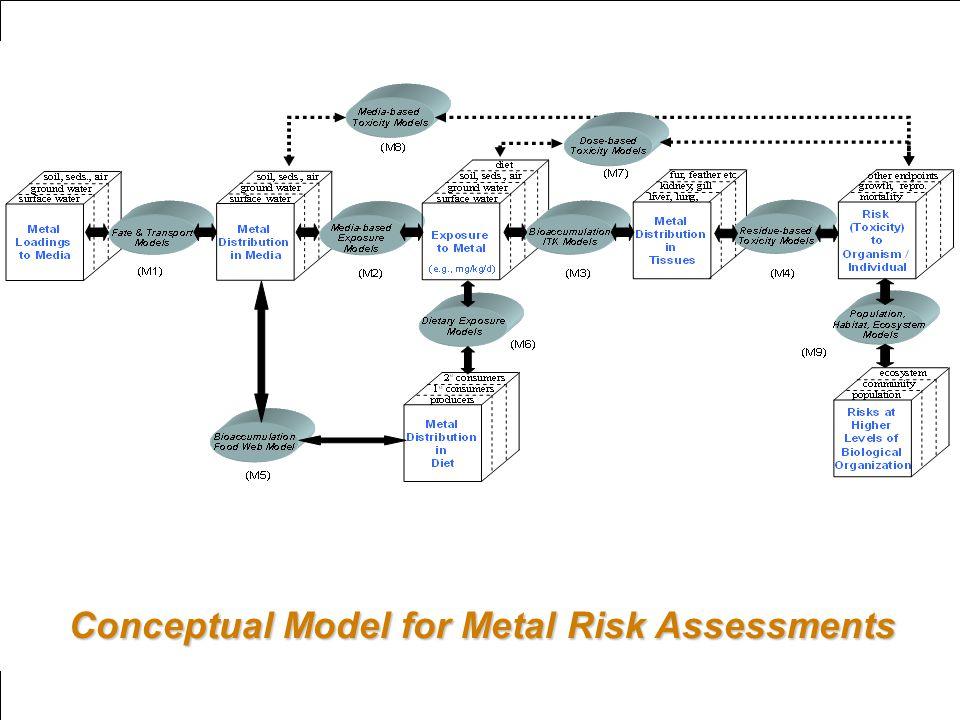 Conceptual Model for Metal Risk Assessments