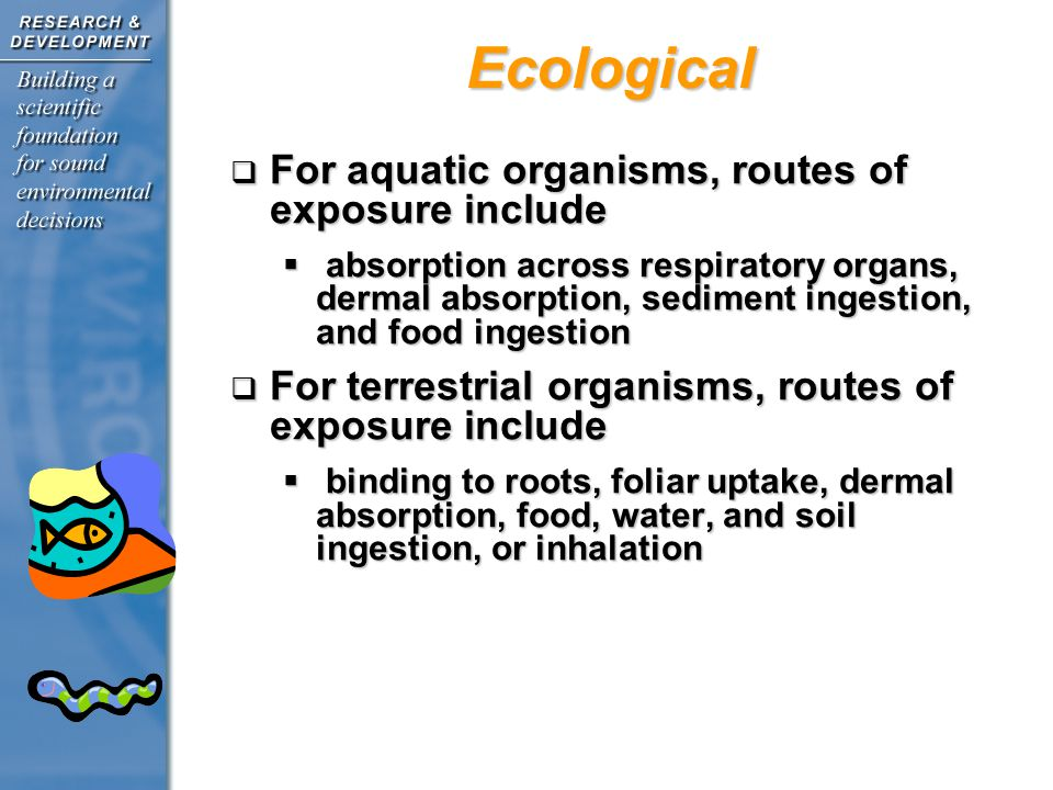Ecological For aquatic organisms, routes of exposure include For aquatic organisms, routes of exposure include absorption across respiratory organs, dermal absorption, sediment ingestion, and food ingestion absorption across respiratory organs, dermal absorption, sediment ingestion, and food ingestion For terrestrial organisms, routes of exposure include For terrestrial organisms, routes of exposure include binding to roots, foliar uptake, dermal absorption, food, water, and soil ingestion, or inhalation binding to roots, foliar uptake, dermal absorption, food, water, and soil ingestion, or inhalation