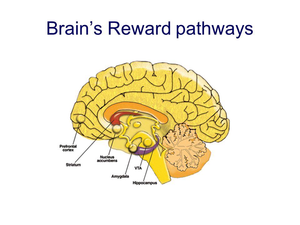 Brains Reward pathways