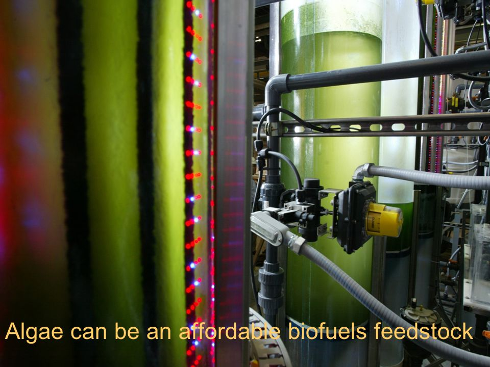 Algae can be an affordable biofuels feedstock