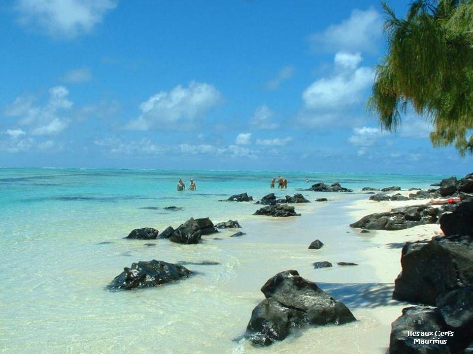 Beach Bottom Bay Barbados