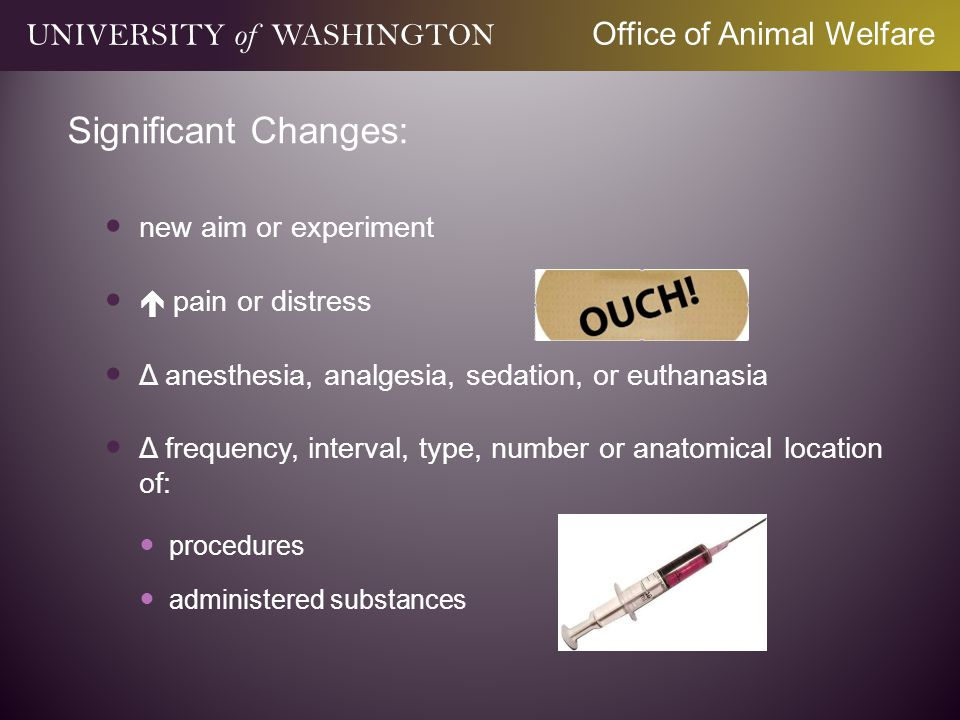 Significant Changes: new aim or experiment pain or distress Δ anesthesia, analgesia, sedation, or euthanasia Δ frequency, interval, type, number or anatomical location of: procedures administered substances UNIVERSITY of WASHINGTON Office of Animal Welfare