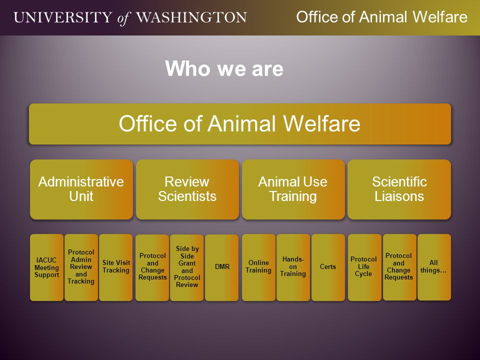 Office of Animal Welfare Administrative Unit IACUC Meeting Support Protocol Admin Review and Tracking Site Visit Tracking Review Scientists Protocol and Change Requests Side by Side Grant and Protocol Review DMR Animal Use Training Online Training Hands- on Training Certs Scientific Liaisons Protocol Life Cycle Protocol and Change Requests All things… UNIVERSITY of WASHINGTON Office of Animal Welfare Who we are