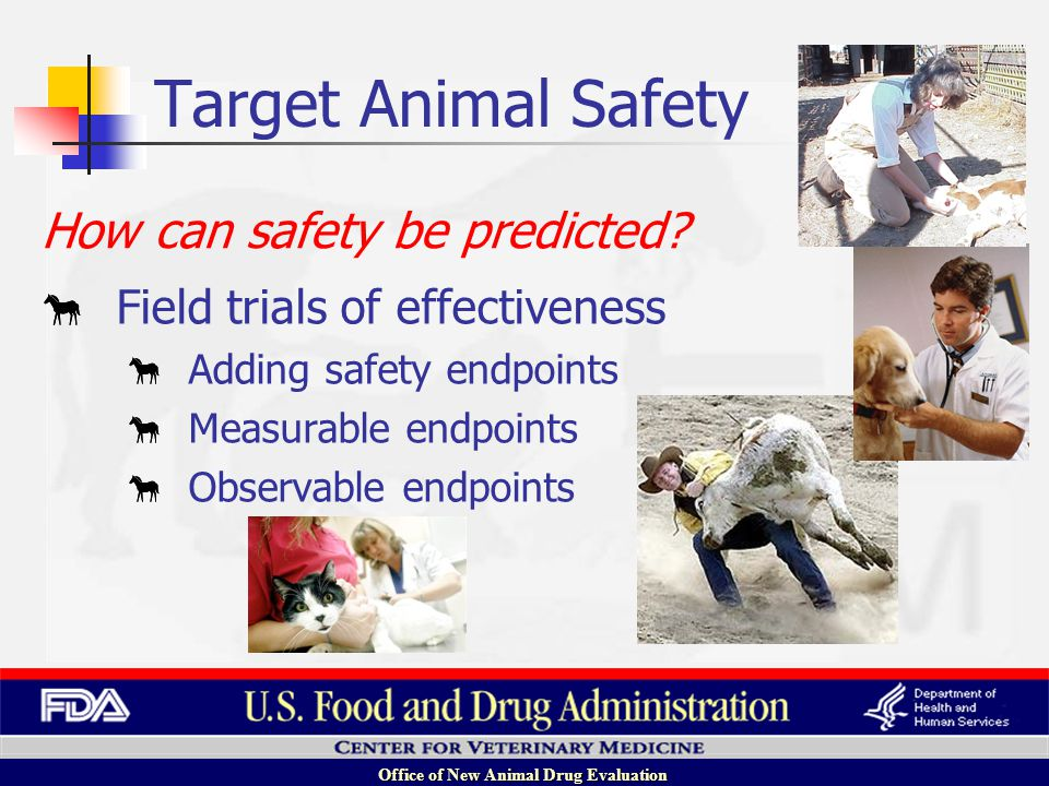 Office of New Animal Drug Evaluation Field trials of effectiveness Adding safety endpoints Measurable endpoints Observable endpoints How can safety be predicted.