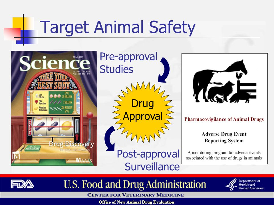 Office of New Animal Drug Evaluation Post-approval Surveillance Drug Approval Pre-approval Studies Target Animal Safety