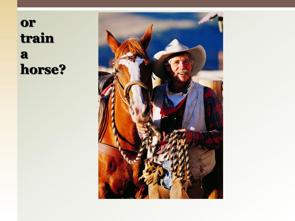 or train a horse?