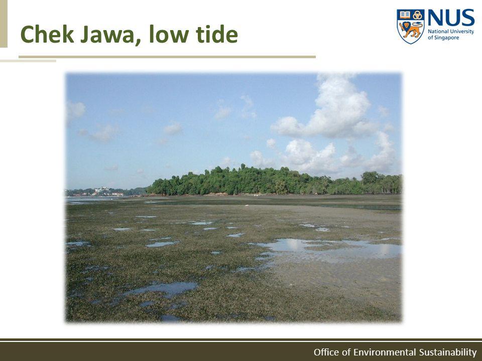 Office of Environmental Sustainability Chek Jawa, low tide