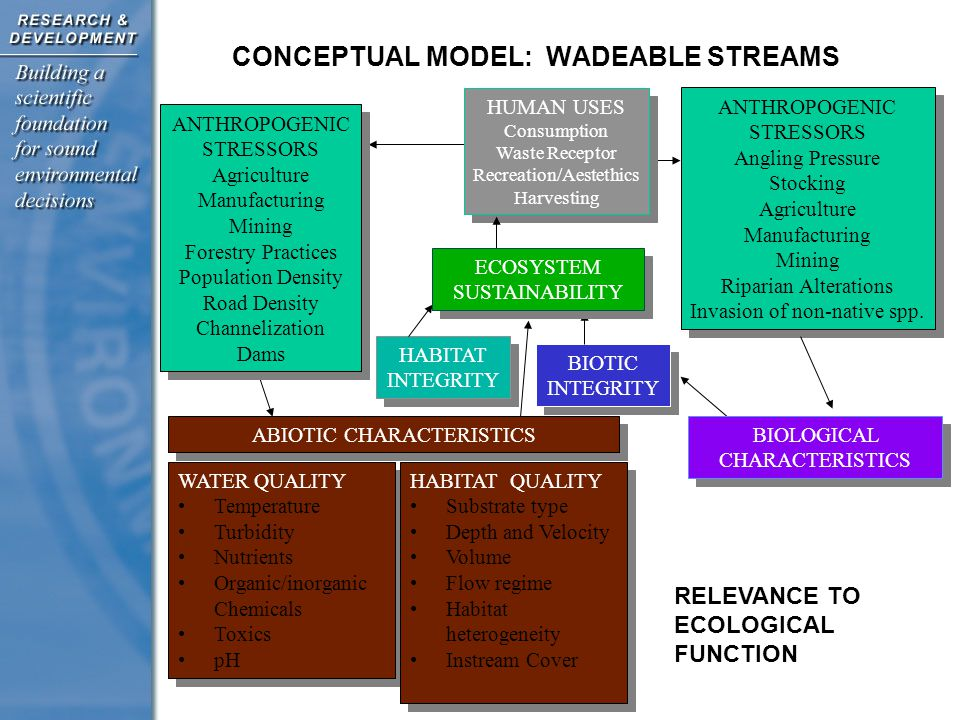 CONCEPTUAL MODEL: WADEABLE STREAMS HUMAN USES Consumption Waste Receptor Recreation/Aestethics Harvesting HUMAN USES Consumption Waste Receptor Recreation/Aestethics Harvesting HABITAT INTEGRITY HABITAT INTEGRITY BIOTIC INTEGRITY BIOTIC INTEGRITY ANTHROPOGENIC STRESSORS Agriculture Manufacturing Mining Forestry Practices Population Density Road Density Channelization Dams ANTHROPOGENIC STRESSORS Agriculture Manufacturing Mining Forestry Practices Population Density Road Density Channelization Dams ANTHROPOGENIC STRESSORS Angling Pressure Stocking Agriculture Manufacturing Mining Riparian Alterations Invasion of non-native spp.