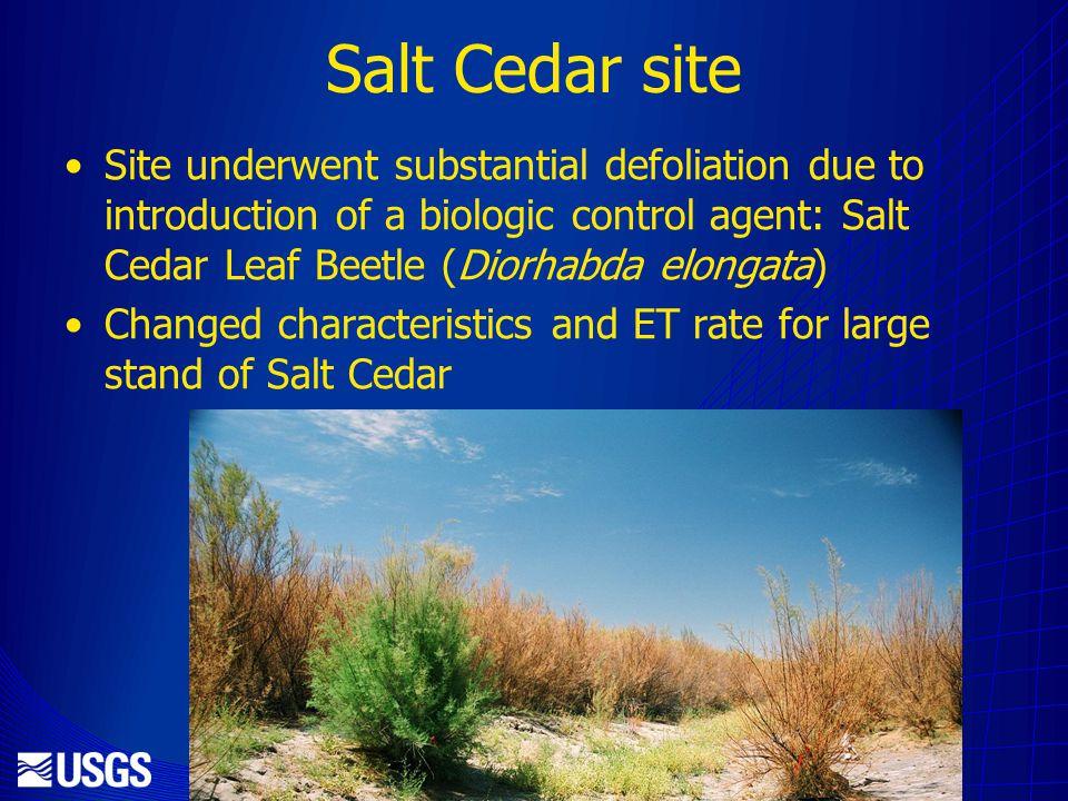 Salt Cedar site Site underwent substantial defoliation due to introduction of a biologic control agent: Salt Cedar Leaf Beetle (Diorhabda elongata) Changed characteristics and ET rate for large stand of Salt Cedar