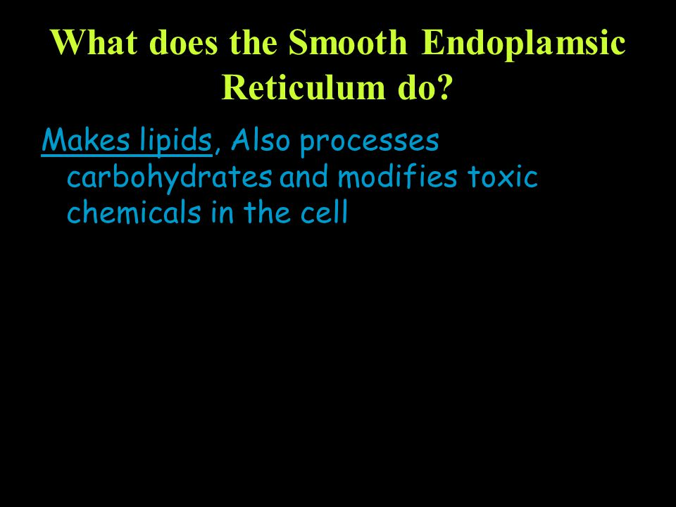 What does the Smooth Endoplamsic Reticulum do? Makes lipids, Also processes carbohydrates and modifies toxic chemicals in the cell