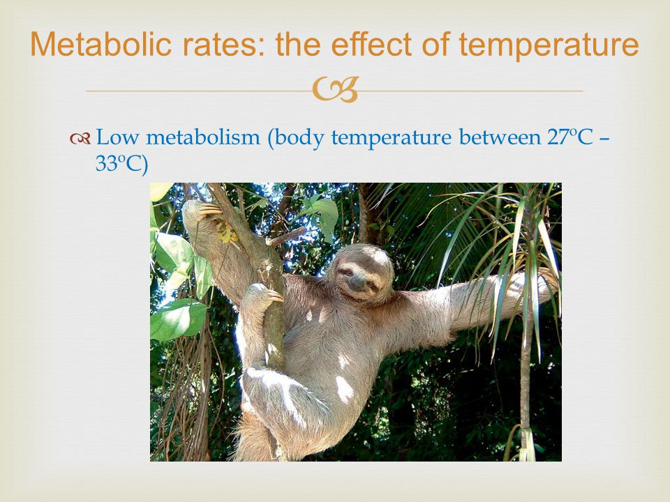 ln rate 10 4 T -1, K -1 Daphnia magna reproduction young/d ingestion 10 6 cells/h growth, d -1 aging, d -1 Metabolic rates: the effect of temperature How do metabolic rates ln k ( T ) depend on temperature?