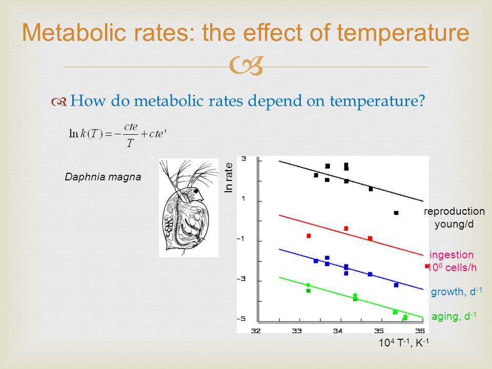 DEB prediction: ultimate size does not depend on temperature Lei de Bergmann: numa espécie que tenha uma distribuição que se extenda ao longo de diferentes latitudes as espécies com maior tamanho e mais pesadas estão junto dos polos Lei de Bergmann (1847) How can we explain this rule using DEB theory.