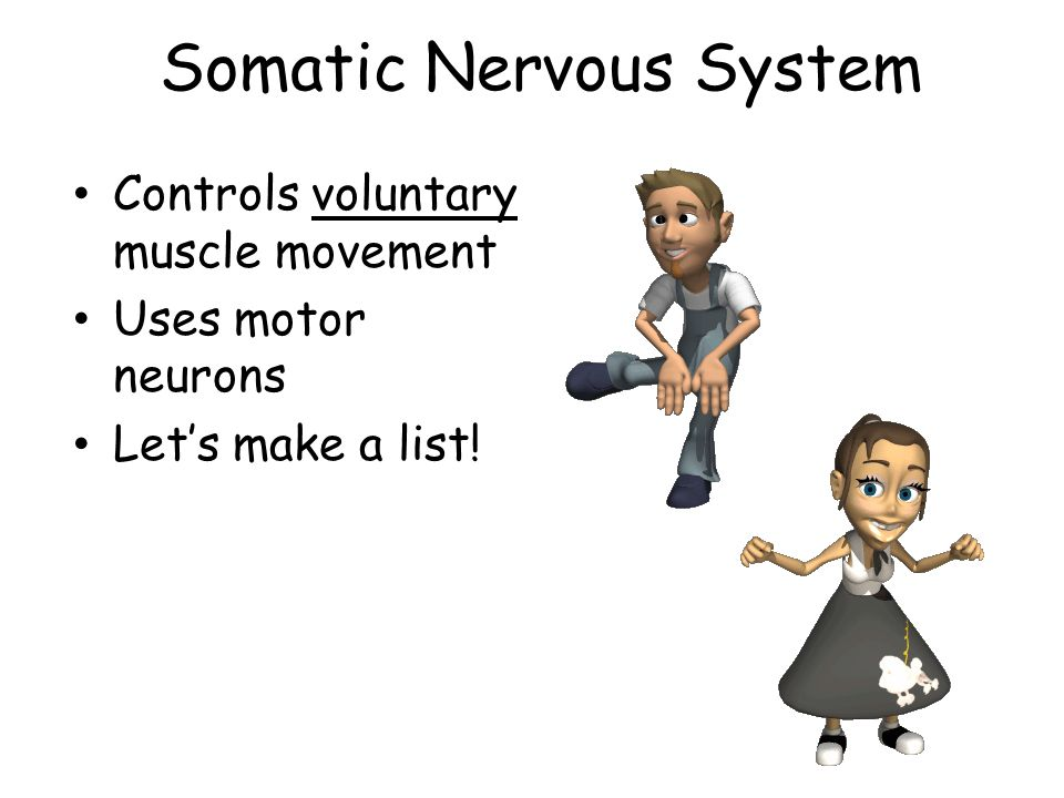 Somatic Nervous System Controls voluntary muscle movement Uses motor neurons Lets make a list!
