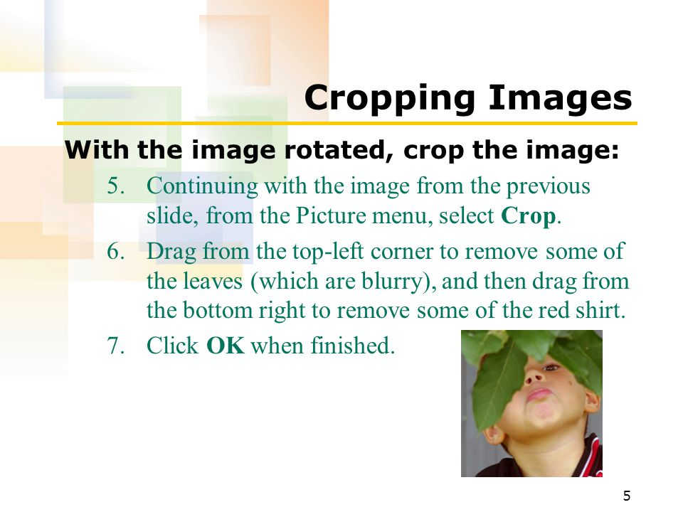 5 Cropping Images With the image rotated, crop the image: 5.Continuing with the image from the previous slide, from the Picture menu, select Crop.