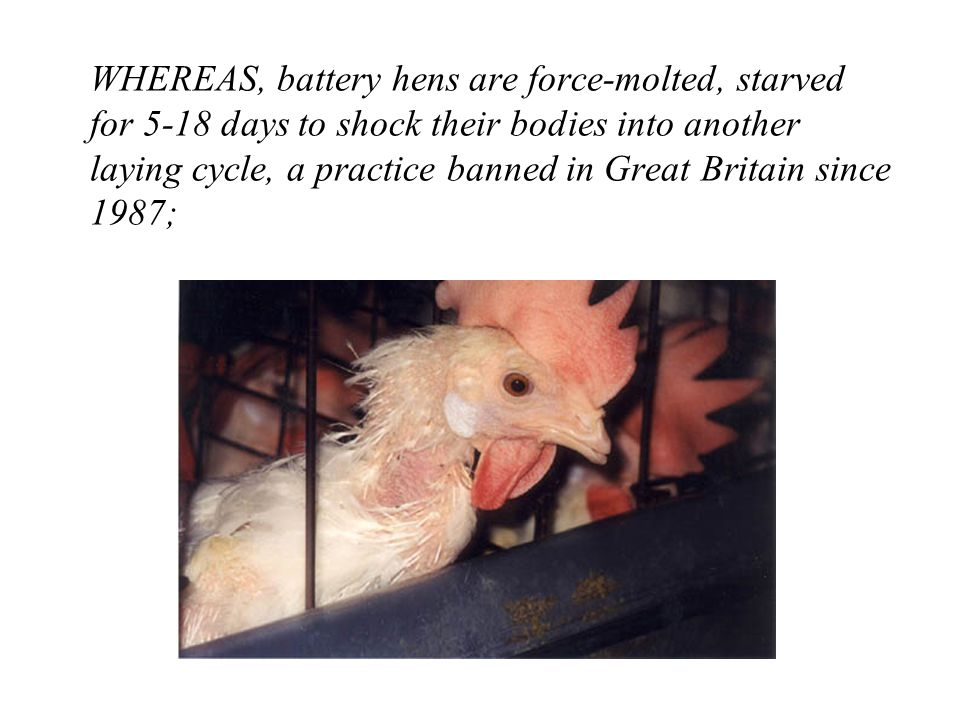 WHEREAS, battery hens are force-molted, starved for 5-18 days to shock their bodies into another laying cycle, a practice banned in Great Britain since 1987;