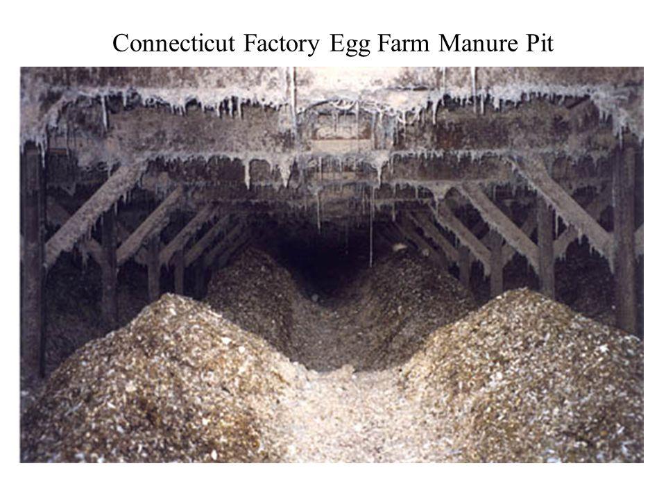 Connecticut Factory Egg Farm Manure Pit