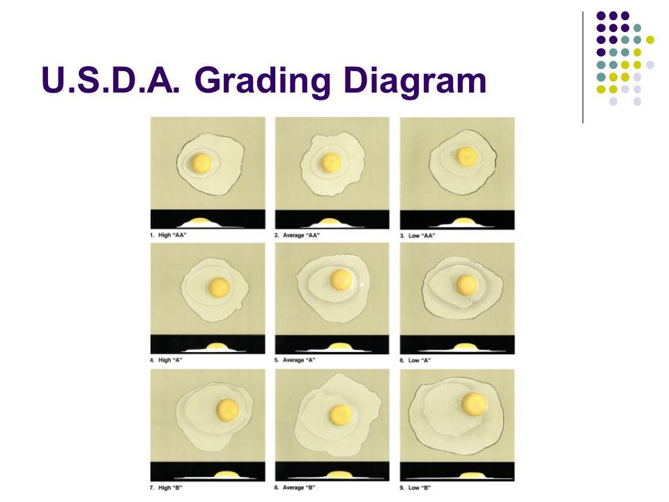 U.S.D.A. Grading Diagram