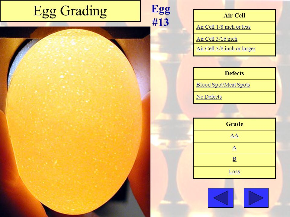 Air Cell Air Cell 1/8 inch or less Air Cell 3/16 inch Air Cell 3/8 inch or larger Grade AA A B Loss Egg Grading Egg #13 Defects Blood Spot/Meat Spots