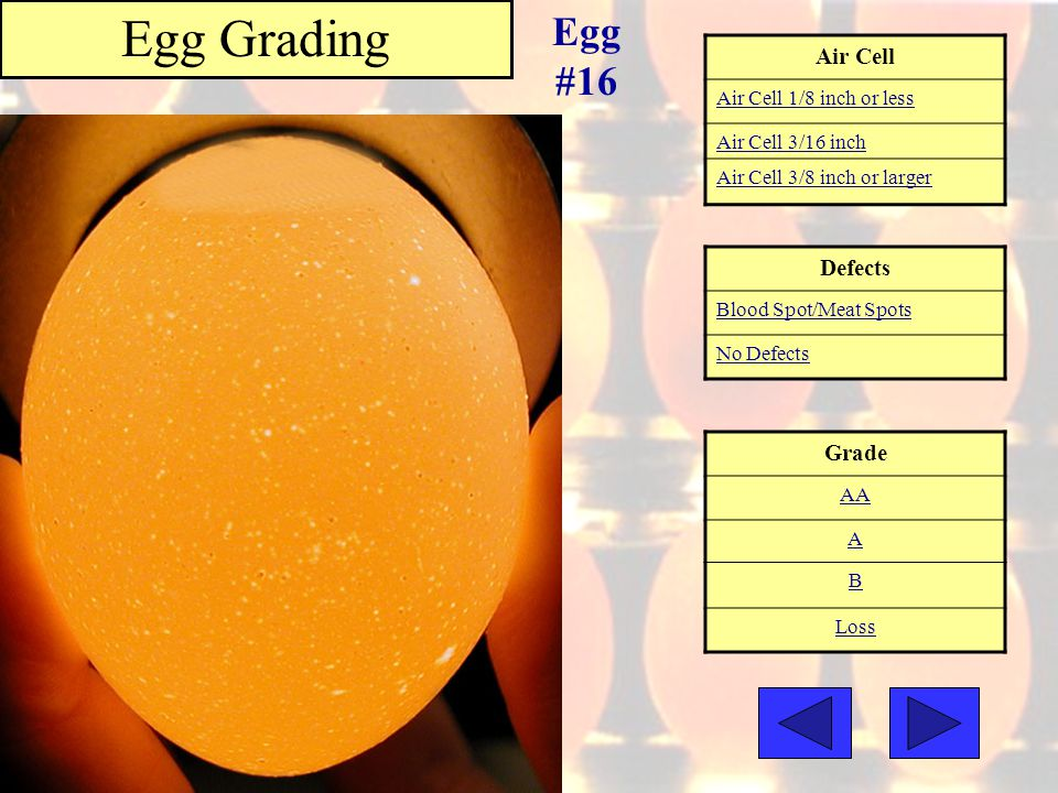 Air Cell Air Cell 1/8 inch or less Air Cell 3/16 inch Air Cell 3/8 inch or larger Grade AA A B Loss Egg Grading Egg #16 Defects Blood Spot/Meat Spots