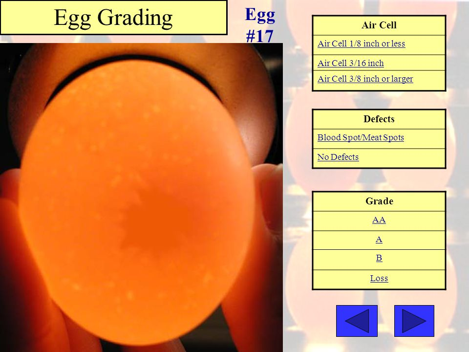 Air Cell Air Cell 1/8 inch or less Air Cell 3/16 inch Air Cell 3/8 inch or larger Grade AA A B Loss Egg Grading Egg #17 Defects Blood Spot/Meat Spots