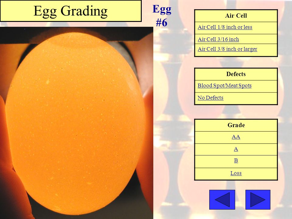 Air Cell Air Cell 1/8 inch or less Air Cell 3/16 inch Air Cell 3/8 inch or larger Grade AA A B Loss Egg Grading Egg #6 Defects Blood Spot/Meat Spots N