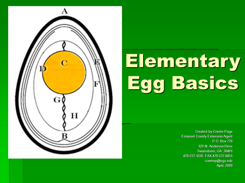 Elementary Egg Basics Created by Connie Page Emanuel County Extension Agent P.O. Box 770 129 N. Anderson Drive Swainsboro, GA 30401 478-237-1226 FAX 4