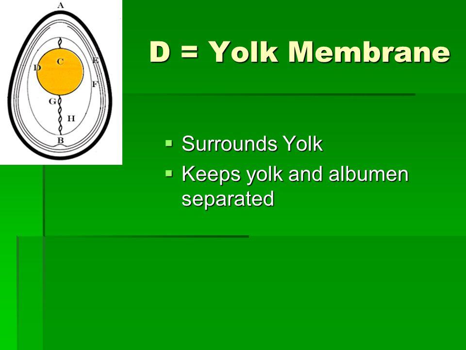 D = Yolk Membrane Surrounds Yolk Surrounds Yolk Keeps yolk and albumen separated Keeps yolk and albumen separated