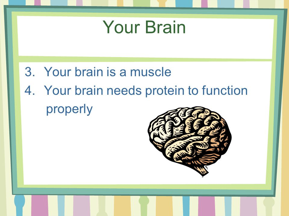 Your Brain 3.Your brain is a muscle 4.Your brain needs protein to function properly