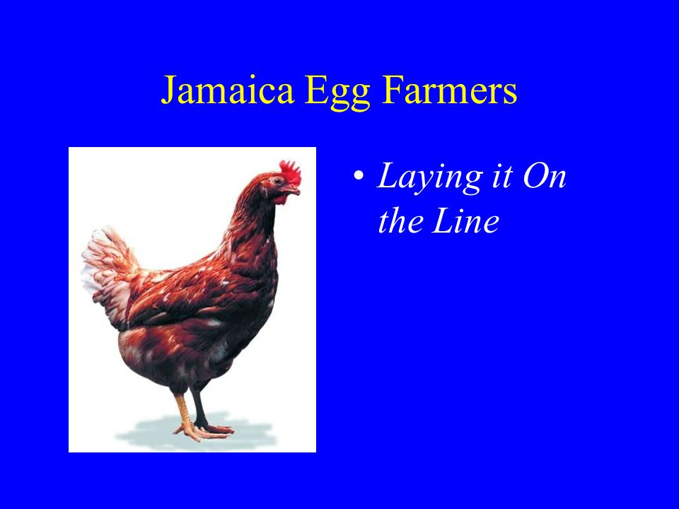 Jamaica Egg Farmers Laying it On the Line