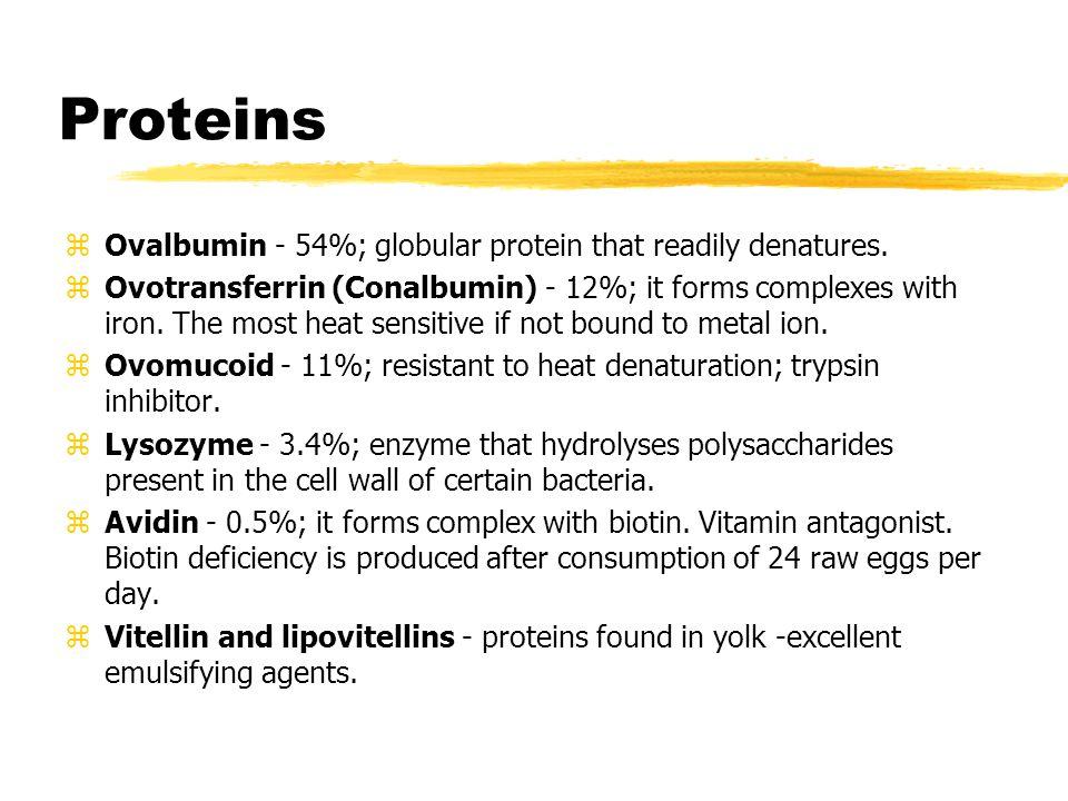 Proteins zOvalbumin - 54%; globular protein that readily denatures.