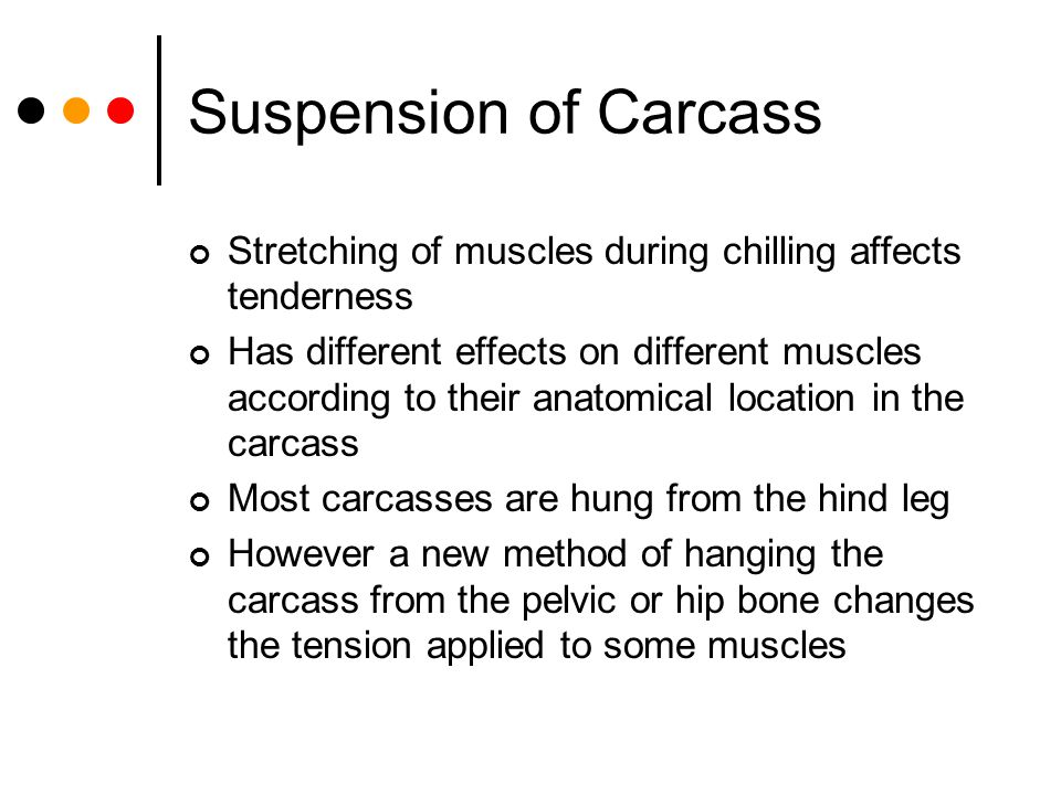 Suspension of Carcass Stretching of muscles during chilling affects tenderness Has different effects on different muscles according to their anatomica